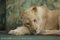keep calm. - 朝から晩まで動物園。(サファリもね)