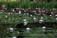 平安神宮の神苑 - chrysalis