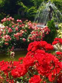 占いの勉強ってどうすればいいの?薔薇シリーズ編 - 幸せプチ開運生活-火、木、土、ブログ更新中