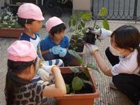【南砂園】野菜の苗植え - ルーチェ保育園ブログ  ● ルーチェのこと ●