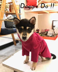 Hello emma !! - Doggie Do!! / good dog and hello cat !!