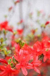 本霧島:緑の中の紅一点 - Happy Homes & Gardens