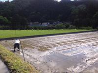補植と除草ペレットまき - にじまる食堂 & にじまる農園