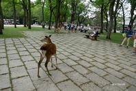 鹿と人のいる風景  1 - aco* mode