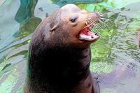 大きな「ジョン」 - 動物園放浪記