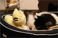 そい寝 - ときどき☆タス