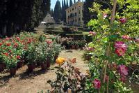 花の町スペッロのバラ祭り、ウンブリア - ペルージャ発 なおこの絵日記 - Fotoblog da Perugia