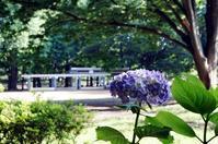 FLOWERS - 6 - Genie