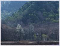 尾瀬散歩-4   070)    - 趣味の写真 ~オリンパスE-M1MarkⅡとE-M1、E-5とたまにフジフィルムXZ-1も使っています。~
