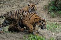 5月24日のパントム - 動物園に嵌り中