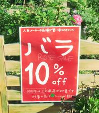 ポンポンかわいいお花たち - さにべるスタッフblog     -Sunny Day's Garden-