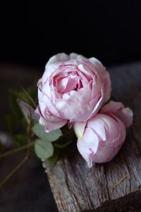 あなたの美的世界で生きなさい - LilyのSweet Style