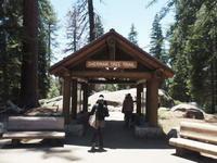 お一人様旅行その2 General Sherman Tree@Sequoia National Park - 気ままなLAヴィンテージ生活