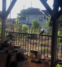 朝が変われば毎日が変わる - お茶畑の間から ~ Ke-yaki Pottery