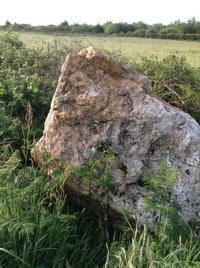今日は巨大水晶を発見! - イギリス ウェールズの自然なくらし