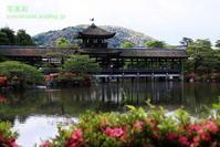 平安神宮の神苑に行く6 - 写楽彩