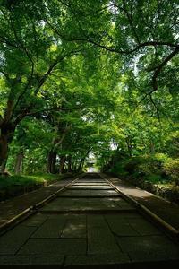 旬緑巡り@毘沙門堂 - デジタルな鍛冶屋の写真歩記