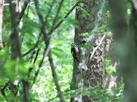 久々のアカゲラ   KGK - シエロの鳥ノート