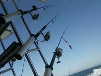 明石のタコ釣り…明石の釣り@ブログ - 明石の釣り@ブログ