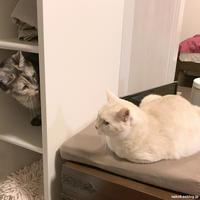 猫収納棚 - 賃貸ネコ暮らし|賃貸住宅でネコを室内飼いする工夫