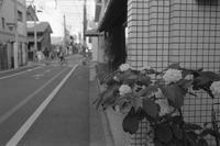 あじさい 京都にて - YAJIS OFFICE BLOG