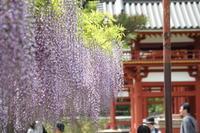 風薫る、藤薫る、筍薫る(笑) - ◆ キョウモドコカデチドリアシ ◆