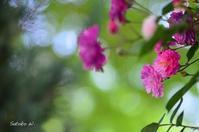 ひかりの花 - 今日の小さなシアワセ