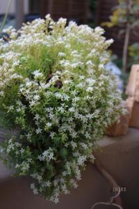 こぼれ落ちそう - CHIROのお庭しごと