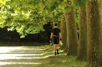 プラタナスの木陰を歩く - 写真で残す都筑の風景