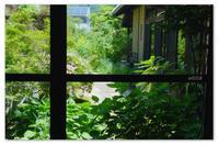 緑色が目にしみる。 - Yuruyuru Photograph