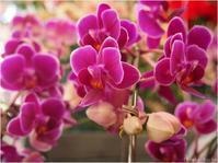 フラワールーシュお花の会☆ 6月レッスンのお知らせ - ルーシュの花仕事