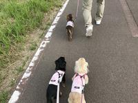17年6月4日 のんびりあさんぽ♪ - 旅行犬 さくら 桃子 あんず 日記