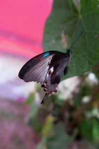 蝶の館、スペッロ バラ祭り - ペルージャ発 なおこの絵日記 - Fotoblog da Perugia
