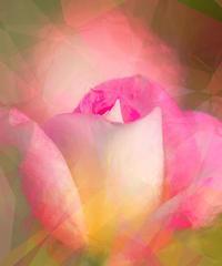 バラ 9(PhotoShop ) - 光 塗人 の デジタル フォト グラフィック アート (DIGITAL PHOTOGRAPHIC ARTWORKS)