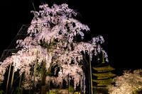 京都の桜2017 東寺ライトアップ - 花景色-K.W.C. PhotoBlog