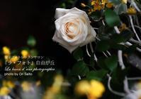 """ソニー銀座 αアカデミーセミナーお越しくださいましてありがとうございました - 東京女子フォトレッスンサロン『ラ・フォト自由が丘』の""""恋するカメラ"""""""