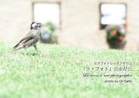 """少年よ大志を抱け!今日もまたまた切り出し御免。ノー望遠55mmとsony α7RIIで一本勝負。 - 東京女子フォトレッスンサロン『ラ・フォト自由が丘』の""""恋するカメラ"""""""