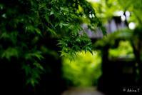 京都の新緑 2017 〜光明寺 3〜 - ◆Akira's Candid Photography