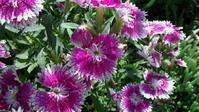 庭の花。 - hotmilkcafe