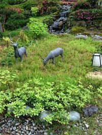お庭の手入れ - 金沢犀川温泉 川端の湯宿「滝亭」BLOG