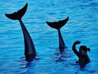 ~イルカの表現力~ アドベンチャーワールド - たんぶーらんの戯言