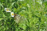 春から夏へ - 蝶の縁