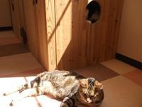 G・ガルシア=マルケス「予告された殺人の記録」 - ネコと文学と猫ブンガク