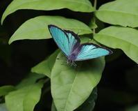 最近の活動と2017年春の推薦図書 - 蝶鳥ウォッチング