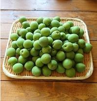 イエシゴトVol.214 今年の梅シゴトと今週の下ごしらえ - YUKA'sレシピ♪