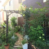 バラの季節が終わって・・・ - misaの庭暮らし~Abandon~