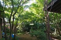 自邸庭木の大剪定は四年に一度 - アトリエMアーキテクツの建築日記