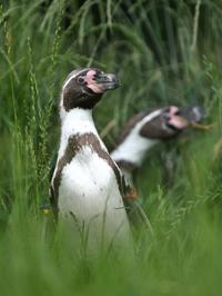 ペンギンヒルズ - bonsoir