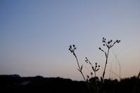 日が暮れる頃 - お庭のおと