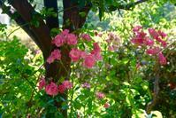6月の庭 - 世話要らずの庭